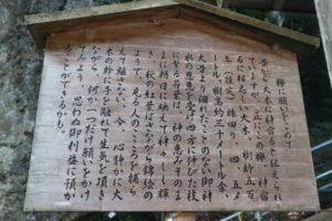 丹生川上神社下社欅に願い