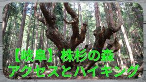 株杉の森アクセスとハイキング