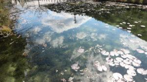 モネの池反射