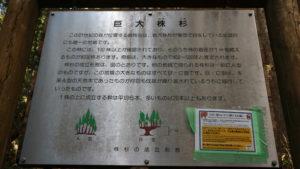 株杉の森看板
